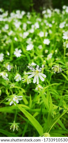 love flowers, this is beautiful white flower, green leaves, nice pic