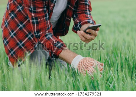 Agronomist is taking picture of green wheat crops with smartphone, adult male farm worker using modern technology in field