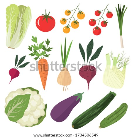 Set of vector vegetables - cauliflower, eggplant, leek, fennel, zucchini, salad, tomato. Fresh local farm and gardening products, organic vegetarian food. Flat vector illustration isolated on white Royalty-Free Stock Photo #1734506549