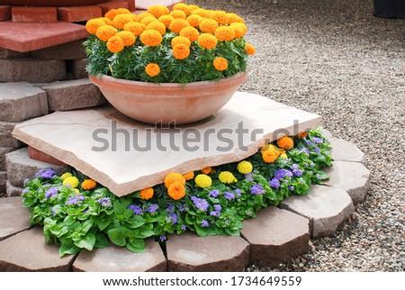 Marigolds Orange Color (Tagetes erecta, Mexican marigold, Aztec marigold, African marigold), marigold pot plant.   #1734649559