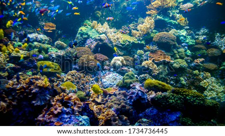 Underwater photo of colorful coral reef with lots of wxotic tropical fishes and sea creatures.