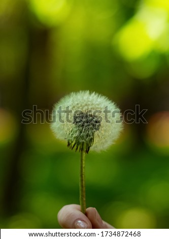 macro photography of dandelion white flower fluffy texture nature peaceful ecology concept in vertical format of picture with blurred background space green and yellow colors copy space