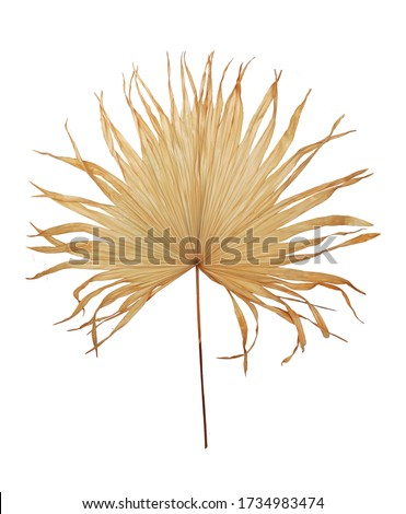 dry plant in ceamic pot isolated on white background. Details of modern boho, tropical , bohemian style Royalty-Free Stock Photo #1734983474
