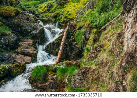 Scenic landscape with beautiful waterfall in forest among rich vegetation. Atmospheric woody scenery with fallen tree trunk in mountain creek. Spring water among wild plants and mosses on rocks. #1735035710