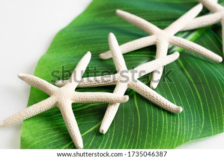 pictures of the still life of summer using starfish