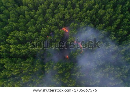 Forest fire. Dry undergrowth with burning gray smoke in the air, natural disaster. Aerial view. Firefighters extinguished the fire. Attention - evening shot shows noise in the picture!