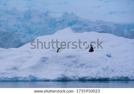 A couple of Emperor penguins on an iceberg with a glacier in the background. The picture was taken at Wilhelmina Bay, Antarctica.