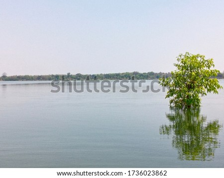 lake Water view with sunlight, water surface texture, shore green tree leaves and sunny day .water background. #1736023862