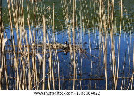 Bird on the shore of a pond in a city forest park #1736084822