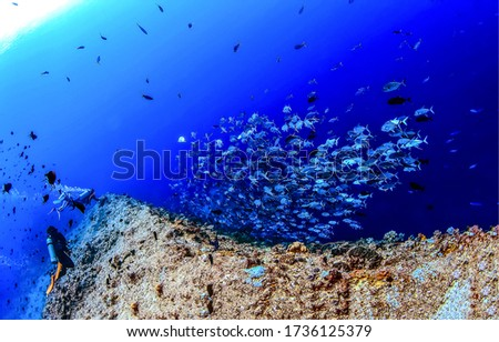 Under water fish shoal view. Underwater diving scene #1736125379