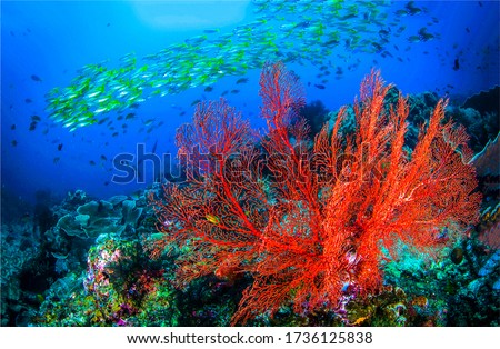 Underwater world scene view. Underwater life landscape #1736125838