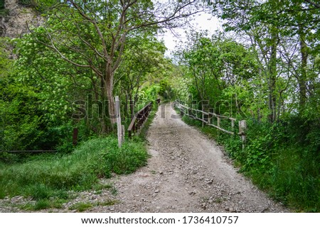 Bridge in the lush vegetation of the woods at the Euganean Hills near Este, Padua, Italy. #1736410757