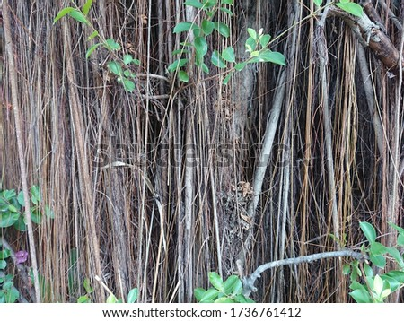Jungle background for powerpoint  presentation
