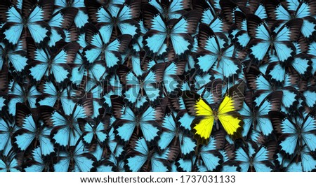 Standing out from the crowd concept. High angle view of a yellow butterfly over many blue ones with copy space Royalty-Free Stock Photo #1737031133