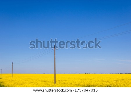 Rapeseed field on a sunny day among which are electric poles #1737047015