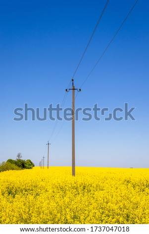 Rapeseed field on a sunny day among which are electric poles #1737047018