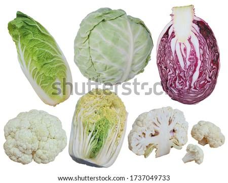 Set of cabbages (romanesco,  cauliflower, white cabbage, red cabbage, napa cabbage, savoy cabbage) isolated on white background   #1737049733
