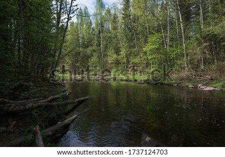 small and clear forest river, Calm place on the Pededze river in Latvia. Trout fishing route. Wild nature  #1737124703