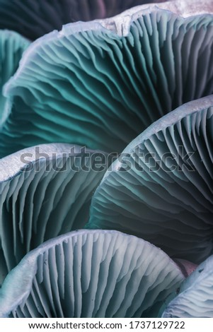 Close up beautiful bunch mushrooms color neon light in the background texture. Macro Photography View.