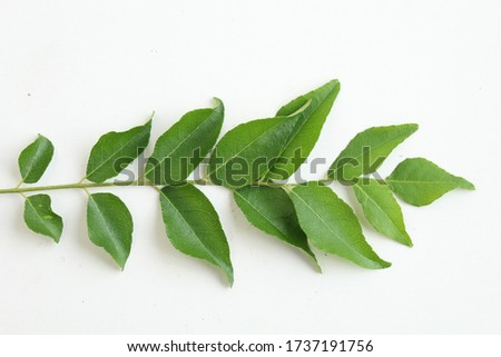 close up picture of a curry leaves obtained form the curry tree. it is used as an ingredient in Indian curries and as a medicinal herb in ayurvedic medicine.