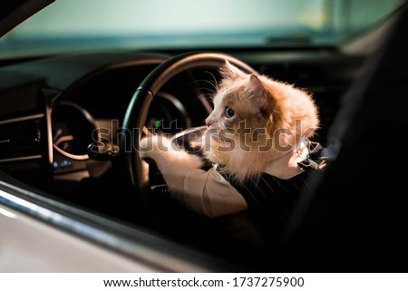 Cute cat is driving a car