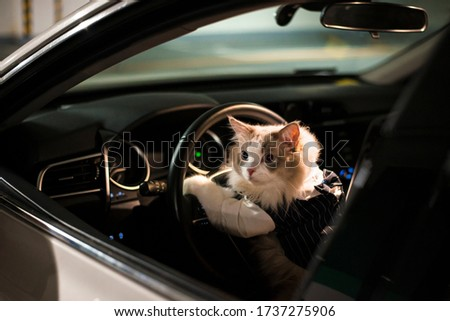 Cute cat driver waiting for someone
