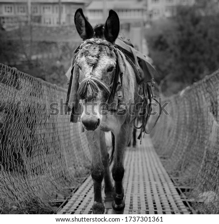 A close-up of a donkey on a bridge in Nepal. The picture was taken on a trip to Nepal.