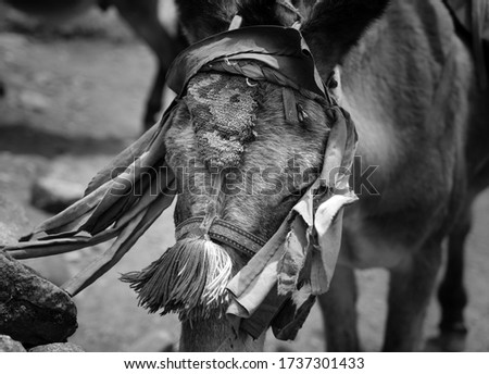 A close-up of a donkey in the streets of Nepal. The picture was taken on a trip to Nepal.