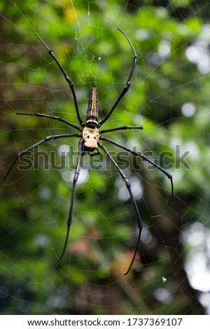 A black and yellow colour spider, colourful big and small spiders in nature, macro picture,Natural background