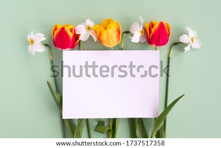 Tulip and Narcissus flowers flat lay and empty mock up letter on pastel paper green background. Creative minimal spring or summer concept, top view, copy space