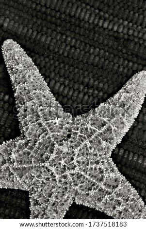 Black and white close up picture of a starfish against a textured background.