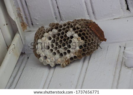 abandoned wasp nest hanging from porch celling. #1737656771
