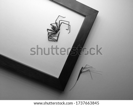 Black and white. Shake. Noise. Grain. Motion blur. A collection of dead spiders and insects on the picture frame as decoration