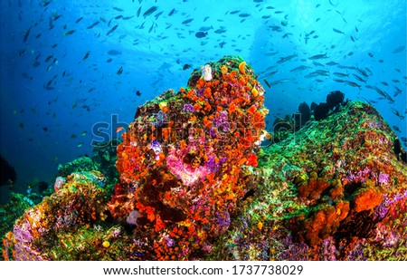 Underwater coral fish shoal view #1737738029