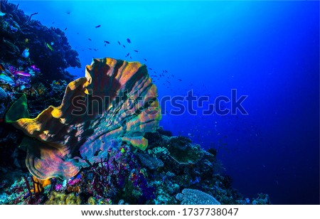 Under water sea sponge view #1737738047