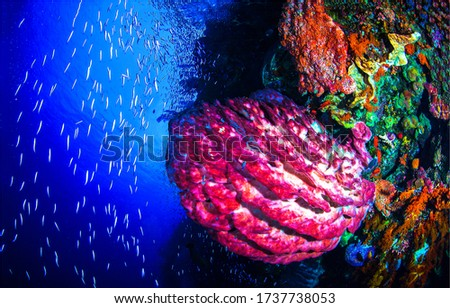 Underwater life scene. Underwater world view #1737738053