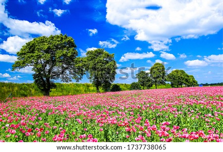 Summer meadow flowers trees landscape. Summertime meadow flowers view. Meadow flowers in summer #1737738065
