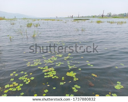 A landscape of blue  lake water with blue sky, green shore water surface texture, brightness,  water background #1737880832