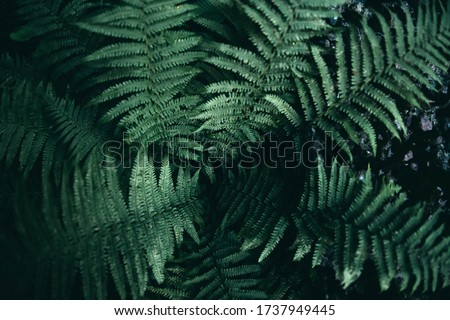 Dark green fern. Beautiful leaves of the plant. Screensaver for phone.