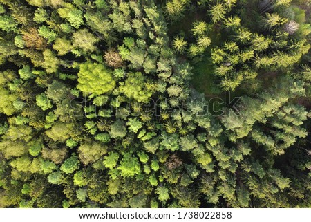 Forest aerial view. Tops of green trees. Aerial shot of summer forest landscape