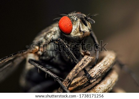 insects nsectsphotography fly beautifulinsects colorfulinsects
