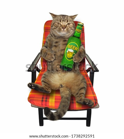 The beige cat in an armchair is drinking beer. White background. Isolated.