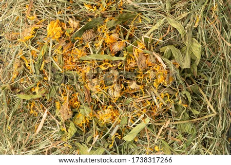 Hay texture straw background fodder. Green dry grass in haystack close up with dried calendula flowers with natural day light #1738317266