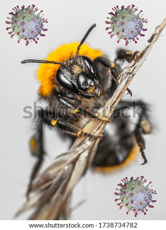 The picture symbolizes the coincidence of the Corona pandemic and the dangers of the deadly hornet.
