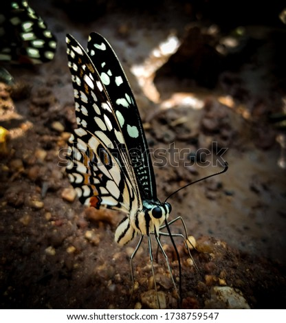 a close up pic of a beautiful butterfly siting calmly over land.