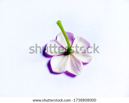 Inverse flower isolated in white background with selective focus and background blur.  A concept pic of infocus and shallow depth of field.