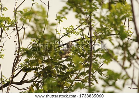 A bird with a long bill and a tail has perched on a tree. Shy creature hides as my camera moves along