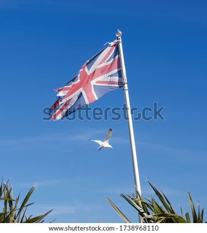 British or UK flag with a seagull flying. Union Jack flag blowing in the wind on a flag pole. UK emblem with flag and seagull flying. Unusual unique union jack photo.