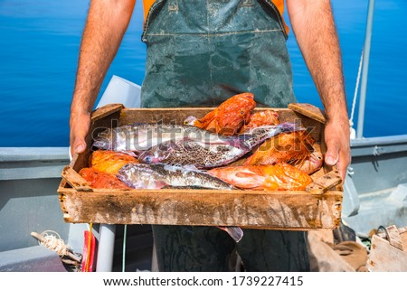 A basket with fresh fishes, on fisherman boat, Crete, Greece. Royalty-Free Stock Photo #1739227415