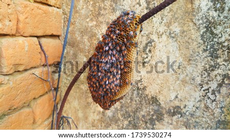 The hive of bees dangling on an iron rod, bee hive and old bricks wall,In Hindi, they are also called madhumakkhi